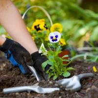 Gardening tips for the winter and in the springs